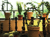 Green plants in clay pots decorating a window — Stockfoto