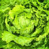 Green iceberg lettuce — Stock Photo