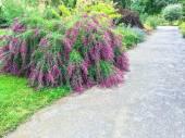 Hermosas plantas floreciendo en el jardín de verano — Foto de Stock