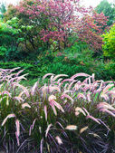 Colorful garden with ornamental grass — Stock Photo