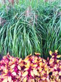 Colorful ornamental plants and grass — Stock Photo