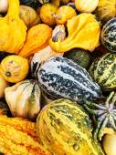 Colorful variety of gourds at the market — Stock Photo