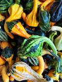 Green and orange decorative gourds — Stock Photo