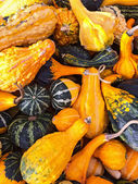 Colorful variety of gourds and squashes — Stock Photo