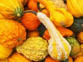 Orange gourds of different shapes — Stock Photo