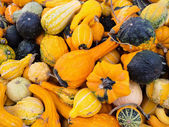 Bright orange gourds and squashes — Stock Photo
