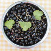 Blackcurrant in a bowl — Foto Stock