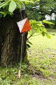 Orienteering — Stock Photo