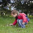 Child picking daisy flowers — Stock Photo #60252307