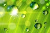 Fresh grass in a sun shine — Stock Vector