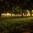 Lamp Lighting Up Branches and Grass in Park at Night. — Stock Photo #75914605