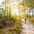 Cyclists rides on a gravel road in the middle of a pine forest. — Stock Photo #76512783