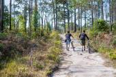 Cyclists rides on a gravel road in the middle of a pine forest. — Stock Photo