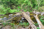 Bamboo bridge over rill in national park forest. — Stock Photo