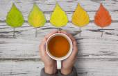 Autumn relax — Stock Photo