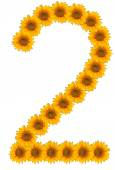 Numbers of flowers of sunflower on a white background — ストック写真