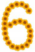 Numbers of flowers of sunflower on a white background — Stock fotografie