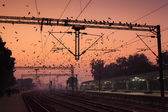 Birds at Agra Cantt Station — Stock Photo