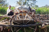 Cattle Powered Water Wheel — Foto Stock