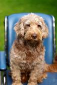 Injured dog — Stock Photo