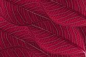 Rode bladeren achtergrond — Stockfoto