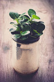 A potted plants in tin cans — Foto de Stock