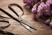 Old Vintage steel scissors on wooden table  with flower — Stok fotoğraf