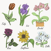 Set of colored flowers - tulip, iris, orchid, rose, sunflower and calla. Hand drawing. Vector illustrations — Stock Vector
