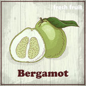 Fresh fruit sketch background. Vintage hand drawing illustration of Bergamot — Stockvector