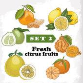 Set 2 Fresh citrus fruits of lemon, mineola, clementine, pomelo, bergamot and mandarin — Stock Vector
