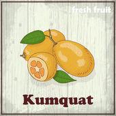 Fresh fruit sketch background. Hand drawing illustration of kumquat — Stock Vector