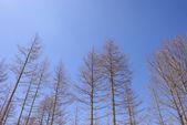 Árvores de folha caduca secas — Fotografia Stock