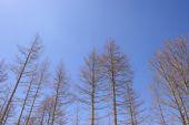 Dry deciduous trees — Fotografia Stock