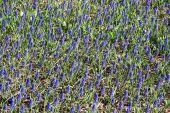 Many spring flowers, field of flowers, purple flowers — Stock Photo