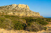 The nature of Cyprus — Stock Photo