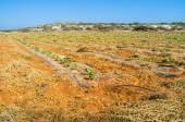 Landwirtschaftliche grundstücke — Stockfoto