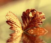 Orvalho de outono — Fotografia Stock