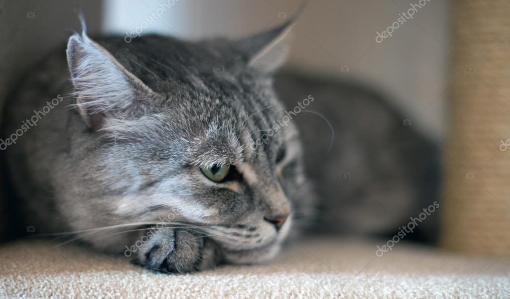 壁纸 动物 猫 猫咪 小猫 桌面 1024_601