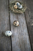 Quail eggs on a wooden table — Stock Photo