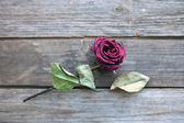 Dried rose laying over wooden table — Stock Photo