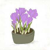Crocus spring flowers — Stock Vector