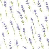 Seamless lavender pattern. — Stock Vector