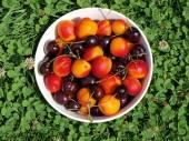 Bowl of fruit, southern Bohemia — Stock Photo