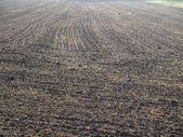 Sown fields , southern Bohemia — Stock Photo