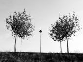 Trees and a lamppost in la Galea — Stock Photo
