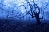 Horror tree at night — Stock Photo