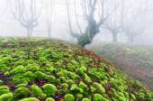 Forest with moss bubbles — Stock Photo