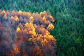 Evergreen and deciduous tree forest  — Stockfoto