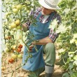 Man hardworking in the garden — Stock Photo #55147237