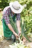 Man hardworking in the garden — Stock Photo